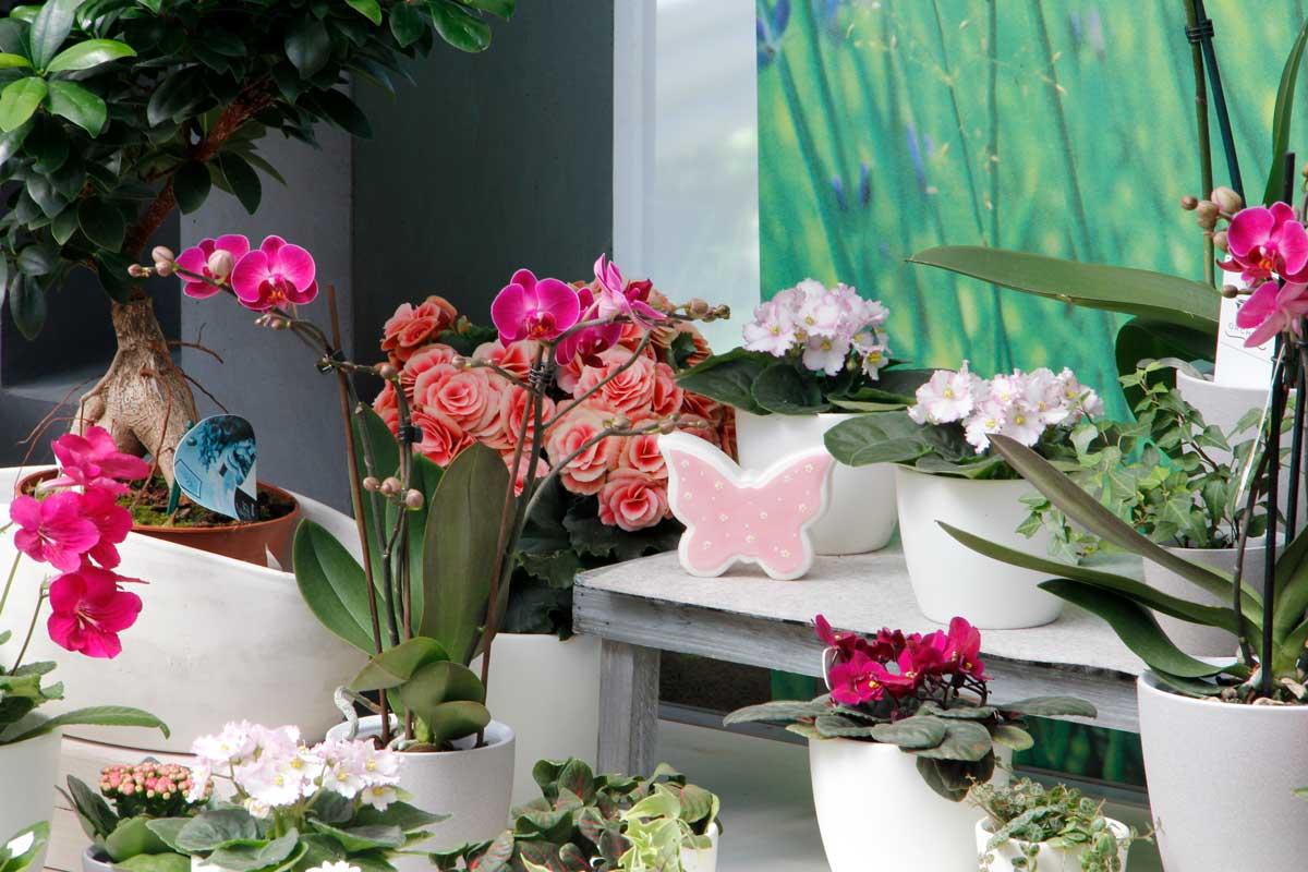 Blumenladen Gärtnerei Winterhalter Floristik Zimmerpflanzen Deko