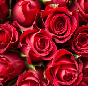 Gärtnerei Winterhalter Floristik zum Valentinstag Blumenstrauß Rosen Geschenk